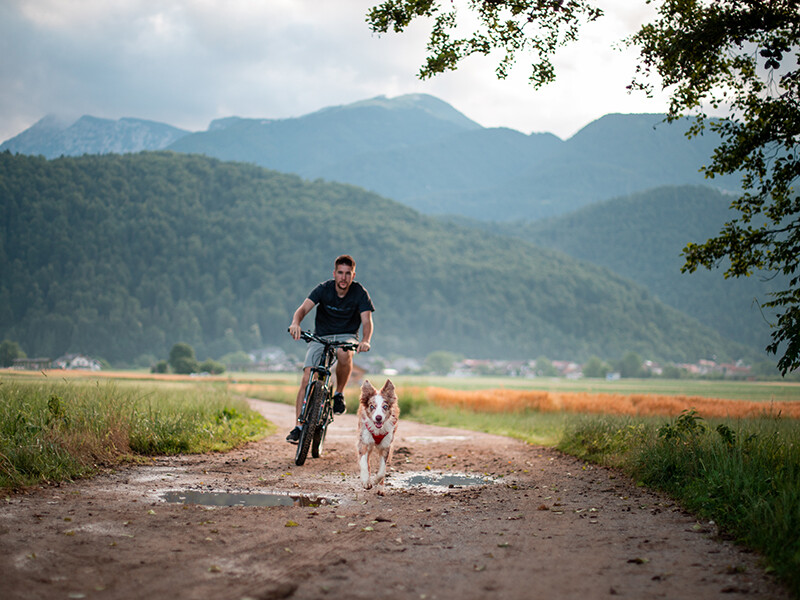 Person and dog mountain biking in Ruffwear gear