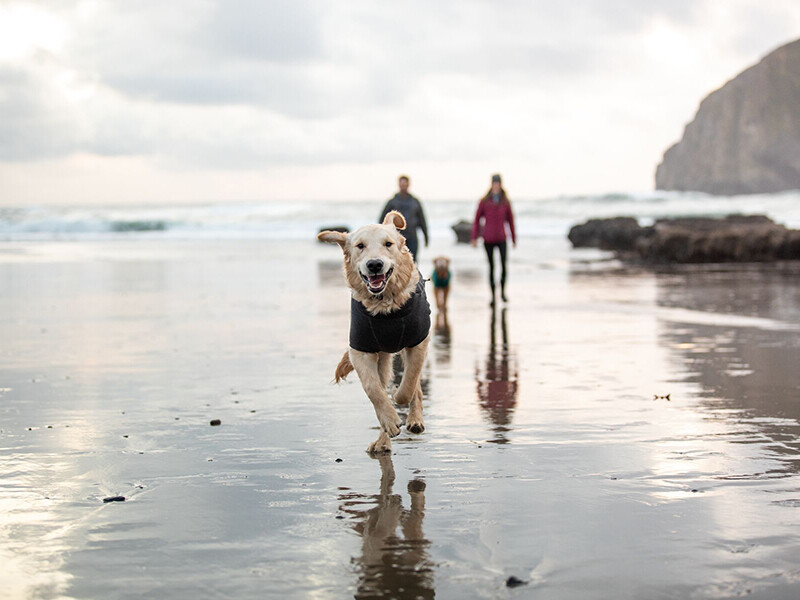 Dog running on the beach wearing Ruffwear