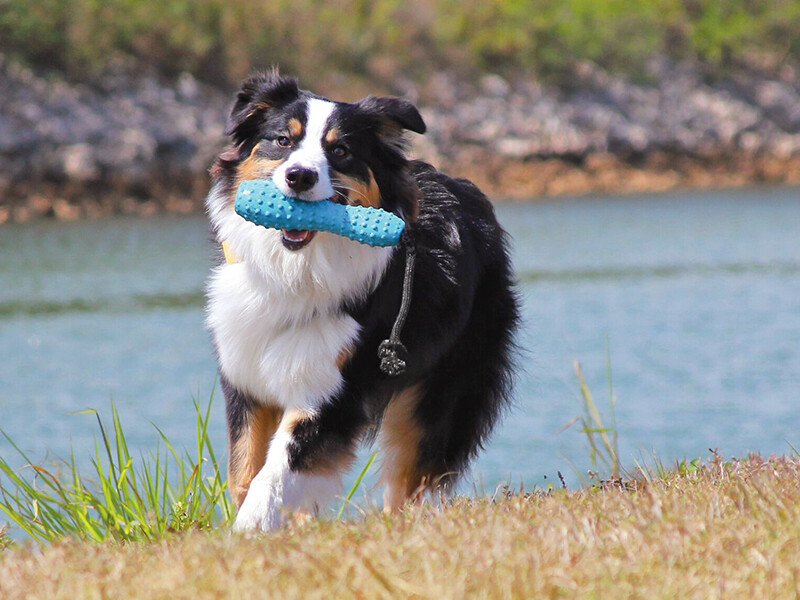 Dog playing with Ruffwear toy