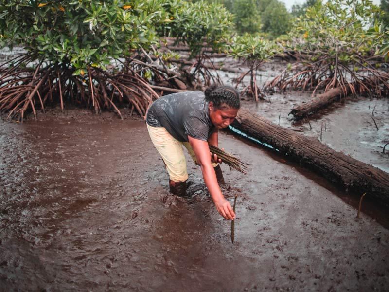 Mangrove Planting Madagascar
