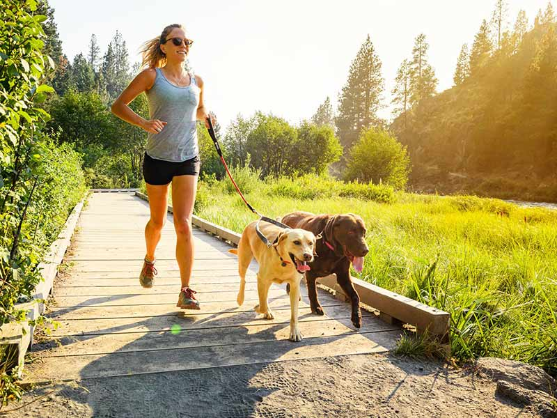 what to buy for your dog for hiking and walking